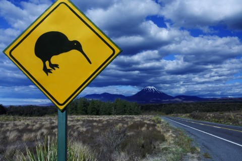 A Kiwi crossing in the North Island of New Zealand. Photo was stolen from King David.