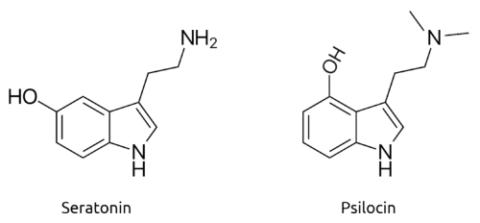 Serotonin vs psilocin